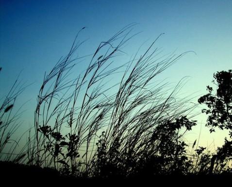 cc-breeze-1